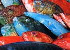沖縄の魚たち