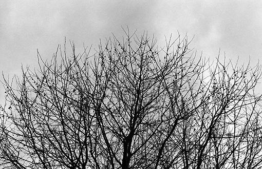 実の多い木