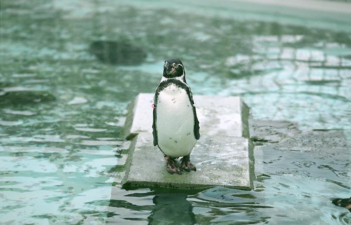 気をつけペンギン