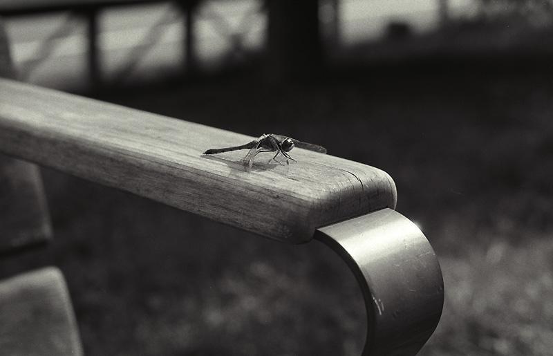 ベンチにトンボ